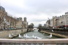 Franska fåglar Arkivfoto