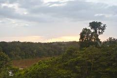 Franska Guyana skog Arkivfoton