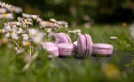 Franska macarons i trädgården Fotografering för Bildbyråer
