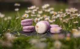 Franska macarons i trädgården Royaltyfria Foton