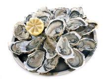 Franska ostron Fotografering för Bildbyråer