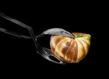 Franska pincers för escargot Arkivfoton