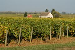 franska vingårdar Royaltyfria Bilder