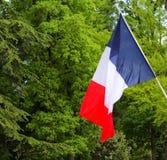 Franskan sjunker att hänga på en pol framme av gröna träd Fotografering för Bildbyråer