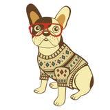 Französische Bulldogge in der Strickjacke und in den Gläsern Lizenzfreies Stockfoto