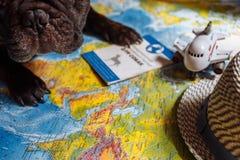 Französische Bulldogge liegt auf der Weltkarte mit Pass, Hut und kleiner Fläche, Reise mit Hund, wohin man mit Hundekonzept geht stockfotografie