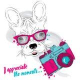 Französische Bulldogge mit einer Kamera Karikaturabbildungserie 2 photograph Vector Illustration für Grußkarte, Plakat, oder Druc stock abbildung