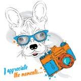 Französische Bulldogge mit einer Kamera Karikaturabbildungserie 2 photograph Vector Illustration für Grußkarte, Plakat, oder Druc lizenzfreie abbildung