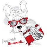 Französische Bulldogge mit einer Kamera Karikaturabbildungserie 2 photograph Vector Illustration für Grußkarte, Plakat, oder Druc vektor abbildung