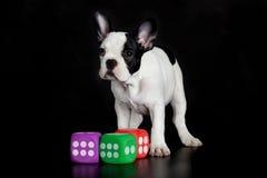 Französische Bulldogge mit würfelt lokalisiert auf schwarzem Hintergrundhund Stockbilder
