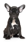 Französische Bulldogge-Welpe Lizenzfreie Stockfotografie