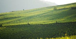 Französische Hügel Lizenzfreies Stockfoto
