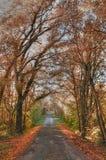 Französische Landschaftsstraße in einem Wald d Stockbild