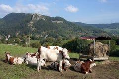 Französische landwirtschaftliche Landschaft Stockfoto