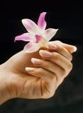 Französische manicured Nägel Lizenzfreies Stockbild