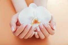 Französische Maniküre Ombre mit Orchidee auf orange Hintergrund Frau mit weißes ombre französischer Maniküre hält Orchideenblume lizenzfreie stockfotos