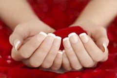 Französische natürliche Maniküre-Hände, die rote Rose Petals halten lizenzfreies stockfoto