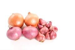 Französische rote Schalotten und Zwiebeln auf weißem Hintergrund Lizenzfreie Stockbilder