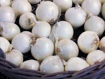 Französische weiße Zwiebeln Stockfotografie