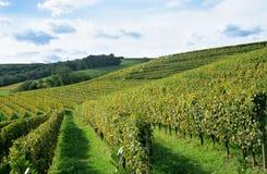 Französische Weinkellerei Lizenzfreies Stockbild