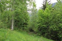 Französischer Alpen-Wald Stockbild