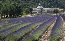 Französisches Kloster und Felder des Lavendels Lizenzfreies Stockfoto