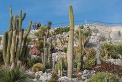 Französisches Riviera, Eze-Dorf, botanischer Garten Stockbild