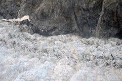Franz Josef Glacier Images libres de droits