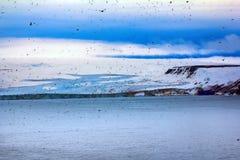 Franz Josef Land - glaciers. 900 km from North Pole. Franz Josef Land - Tikhaya Bay, island. Plenty flying birds from bird rookery royalty free stock photo