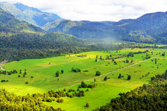 Franz Josef view from Helicopter. Green grass field of Franz Josef Glacier Region Royalty Free Stock Images