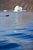 Franz Joseph Fjord - la Groenlandia Fotografia Stock Libera da Diritti