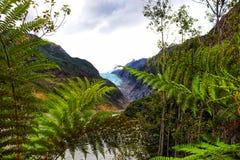 Franz Joseph Glacier - Nya Zeeland arkivbild