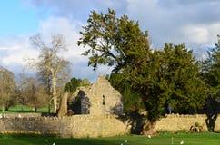 Franziskanerkloster-Ruinen Adare Lizenzfreie Stockfotografie