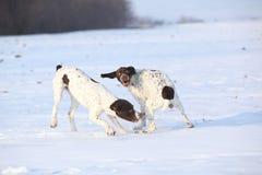 Franzosen, welche die Hunde spielen im Schnee zeigen Lizenzfreie Stockfotos