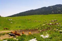 Französische Alpen Lizenzfreies Stockfoto