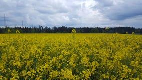 frappe la nature Photos stock