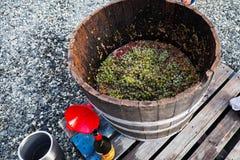 Frapper du pied de vin images libres de droits