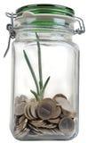 Frasco com as moedas com planta Fotos de Stock Royalty Free