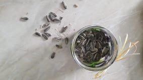 Frasco com sementes de girassol Imagem de Stock Royalty Free