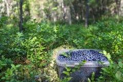 Frasco completamente dos mirtilos na floresta Imagem de Stock Royalty Free