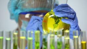 Frasco de la marca del científico con la planta en resultado líquido amarillo del experimento que preserva almacen de video