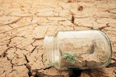Frasco de vidro diminuto com a plântula nova da árvore que cresce no solo, na terra vazia seca e da quebra do fundo fotos de stock royalty free