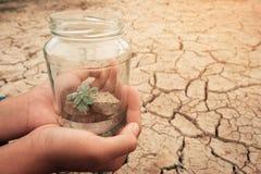 Frasco de vidro diminuto com a plântula nova da árvore que cresce no solo, na terra vazia seca e da quebra do fundo fotografia de stock