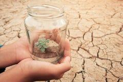 Frasco de vidro diminuto com a plântula nova da árvore que cresce no solo, na terra vazia seca e da quebra do fundo imagens de stock