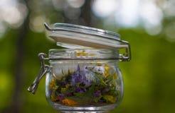 Frasco de vidro e ervas diferentes Imagem de Stock Royalty Free
