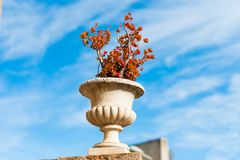 Frasco decorativo espanhol velho com as flores vermelhas na cidade mediterrânea em spain, durante o dia de verão ensolarado Foto de Stock Royalty Free