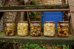 Frascos de vidro com cogumelos enlatados em uma placa de madeira Foto de Stock