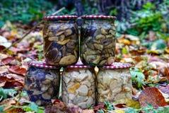 Frascos de vidro com os cogumelos nas folhas secas caídas Imagem de Stock Royalty Free