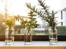 Frascos de vidro de ervas verdes Imagem de Stock