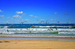Fraser Island, Australia Stock Photo
